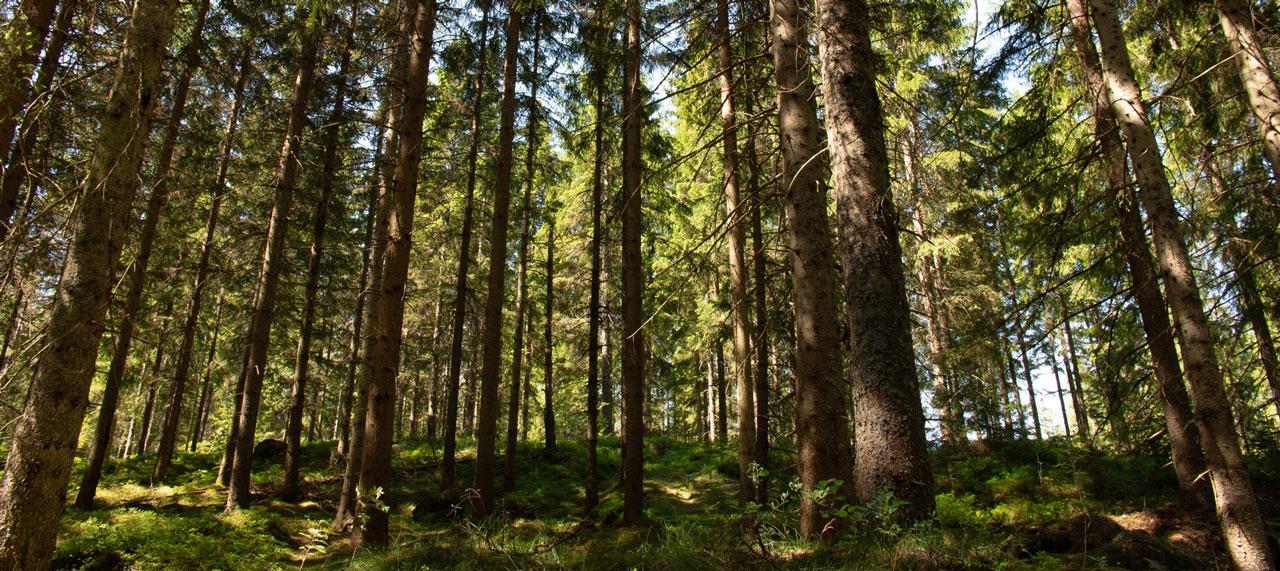 Peer-Span Wald-Licht-Spiel