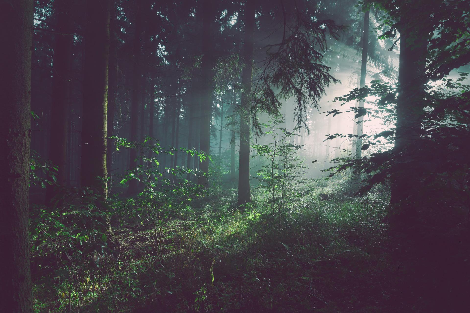 Peer-Span Titelbild Wald mit Lichteinfall