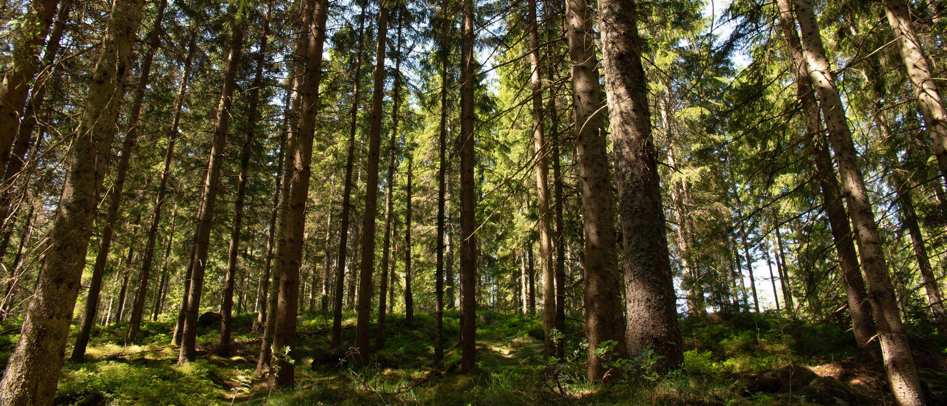 Peer-Span Wald